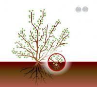 hermanek - 180_13.jpg - Didaktické animace